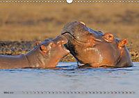 Flusspferde Magie des Augenblicks - Hippos in Afrika (Wandkalender 2018 DIN A3 quer) - Produktdetailbild 3