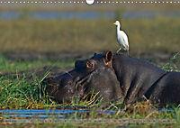 Flusspferde Magie des Augenblicks - Hippos in Afrika (Wandkalender 2018 DIN A3 quer) - Produktdetailbild 6