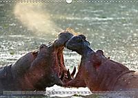 Flusspferde Magie des Augenblicks - Hippos in Afrika (Wandkalender 2018 DIN A3 quer) - Produktdetailbild 7