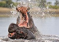 Flusspferde Magie des Augenblicks - Hippos in Afrika (Wandkalender 2018 DIN A3 quer) - Produktdetailbild 9