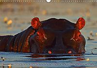 Flusspferde Magie des Augenblicks - Hippos in Afrika (Wandkalender 2018 DIN A3 quer) - Produktdetailbild 12