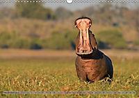 Flusspferde Magie des Augenblicks - Hippos in Afrika (Wandkalender 2018 DIN A3 quer) - Produktdetailbild 11