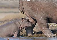 Flusspferde Magie des Augenblicks - Hippos in Afrika (Wandkalender 2018 DIN A3 quer) - Produktdetailbild 10