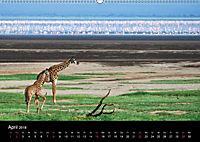 GIRAFFEN - Liebliche Riesen der afrikanischen Savanne (Wandkalender 2018 DIN A2 quer) - Produktdetailbild 4