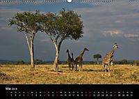 GIRAFFEN - Liebliche Riesen der afrikanischen Savanne (Wandkalender 2018 DIN A2 quer) - Produktdetailbild 5