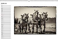 Harvest, pictures from yesteryear (Wall Calendar 2018 DIN A3 Landscape) - Produktdetailbild 6