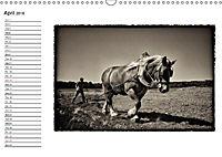 Harvest, pictures from yesteryear (Wall Calendar 2018 DIN A3 Landscape) - Produktdetailbild 4