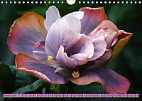 Himmlische Hibisken (Wandkalender 2018 DIN A4 quer) - Produktdetailbild 1