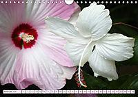 Himmlische Hibisken (Wandkalender 2018 DIN A4 quer) - Produktdetailbild 2