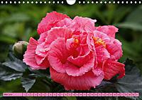 Himmlische Hibisken (Wandkalender 2018 DIN A4 quer) - Produktdetailbild 5