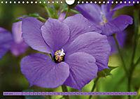 Himmlische Hibisken (Wandkalender 2018 DIN A4 quer) - Produktdetailbild 6