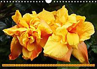 Himmlische Hibisken (Wandkalender 2018 DIN A4 quer) - Produktdetailbild 9