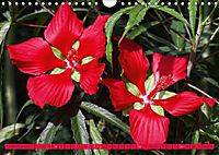 Himmlische Hibisken (Wandkalender 2018 DIN A4 quer) - Produktdetailbild 11