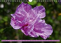 Himmlische Hibisken (Wandkalender 2018 DIN A4 quer) - Produktdetailbild 12