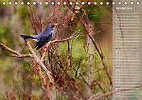 Hispanolas Vogelwelt (Tischkalender 2018 DIN A5 quer) Dieser erfolgreiche Kalender wurde dieses Jahr mit gleichen Bilder - Produktdetailbild 1