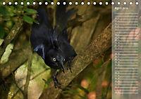 Hispanolas Vogelwelt (Tischkalender 2018 DIN A5 quer) Dieser erfolgreiche Kalender wurde dieses Jahr mit gleichen Bilder - Produktdetailbild 4
