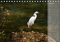 Hispanolas Vogelwelt (Tischkalender 2018 DIN A5 quer) Dieser erfolgreiche Kalender wurde dieses Jahr mit gleichen Bilder - Produktdetailbild 6
