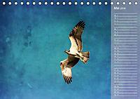 Hispanolas Vogelwelt (Tischkalender 2018 DIN A5 quer) Dieser erfolgreiche Kalender wurde dieses Jahr mit gleichen Bilder - Produktdetailbild 5