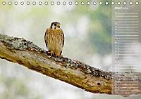 Hispanolas Vogelwelt (Tischkalender 2018 DIN A5 quer) Dieser erfolgreiche Kalender wurde dieses Jahr mit gleichen Bilder - Produktdetailbild 3