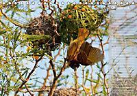 Hispanolas Vogelwelt (Tischkalender 2018 DIN A5 quer) Dieser erfolgreiche Kalender wurde dieses Jahr mit gleichen Bilder - Produktdetailbild 10