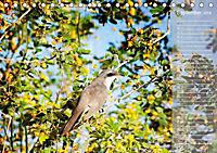 Hispanolas Vogelwelt (Tischkalender 2018 DIN A5 quer) Dieser erfolgreiche Kalender wurde dieses Jahr mit gleichen Bilder - Produktdetailbild 9