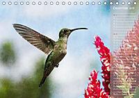 Hispanolas Vogelwelt (Tischkalender 2018 DIN A5 quer) Dieser erfolgreiche Kalender wurde dieses Jahr mit gleichen Bilder - Produktdetailbild 12