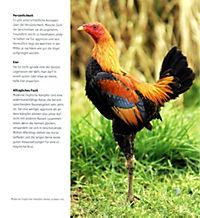 Hühner - Produktdetailbild 7