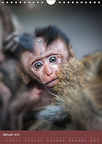 Ich glaub ich bin ein Affe (Wandkalender 2018 DIN A4 hoch) - Produktdetailbild 1