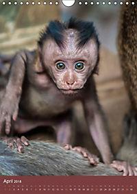 Ich glaub ich bin ein Affe (Wandkalender 2018 DIN A4 hoch) - Produktdetailbild 4