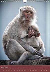 Ich glaub ich bin ein Affe (Wandkalender 2018 DIN A4 hoch) - Produktdetailbild 6