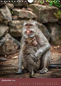 Ich glaub ich bin ein Affe (Wandkalender 2018 DIN A4 hoch) - Produktdetailbild 9