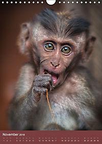 Ich glaub ich bin ein Affe (Wandkalender 2018 DIN A4 hoch) - Produktdetailbild 11