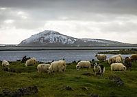 Island (Tischaufsteller DIN A5 quer) - Produktdetailbild 5