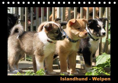 Islandhund - Welpen (Tischkalender 2018 DIN A5 quer), Angelika Möthrath