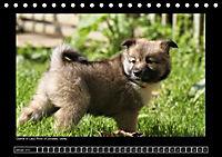Islandhund - Welpen (Tischkalender 2018 DIN A5 quer) - Produktdetailbild 1