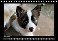 Islandhund - Welpen (Tischkalender 2018 DIN A5 quer) - Produktdetailbild 2