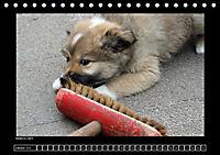 Islandhund - Welpen (Tischkalender 2018 DIN A5 quer) - Produktdetailbild 10