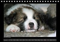 Islandhund - Welpen (Tischkalender 2018 DIN A5 quer) - Produktdetailbild 12