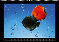 Kalendarische Unterwasserwelt (Wandkalender 2018 DIN A2 quer) - Produktdetailbild 3