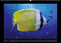 Kalendarische Unterwasserwelt (Wandkalender 2018 DIN A2 quer) - Produktdetailbild 1