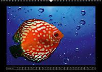 Kalendarische Unterwasserwelt (Wandkalender 2018 DIN A2 quer) - Produktdetailbild 2