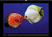 Kalendarische Unterwasserwelt (Wandkalender 2018 DIN A2 quer) - Produktdetailbild 7