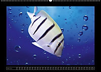 Kalendarische Unterwasserwelt (Wandkalender 2018 DIN A2 quer) - Produktdetailbild 6