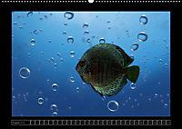 Kalendarische Unterwasserwelt (Wandkalender 2018 DIN A2 quer) - Produktdetailbild 8