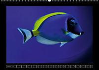 Kalendarische Unterwasserwelt (Wandkalender 2018 DIN A2 quer) - Produktdetailbild 10