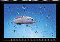 Kalendarische Unterwasserwelt (Wandkalender 2018 DIN A2 quer) - Produktdetailbild 11