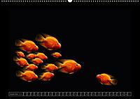 Kalendarische Unterwasserwelt (Wandkalender 2018 DIN A2 quer) - Produktdetailbild 9