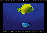 Kalendarische Unterwasserwelt (Wandkalender 2018 DIN A2 quer) - Produktdetailbild 12