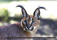 Katzen Afrikas (Wandkalender 2018 DIN A2 quer) Dieser erfolgreiche Kalender wurde dieses Jahr mit gleichen Bildern und a - Produktdetailbild 1