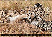 Katzen Afrikas (Wandkalender 2018 DIN A2 quer) Dieser erfolgreiche Kalender wurde dieses Jahr mit gleichen Bildern und a - Produktdetailbild 3